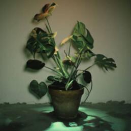 Jonas Marguet - Biotopia (1. Preis)